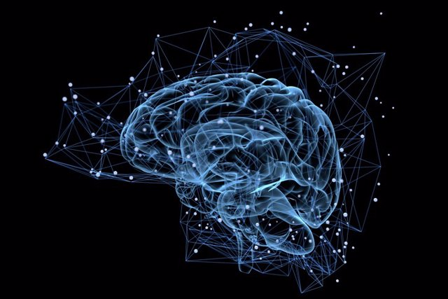 Epilepsia, cerebro