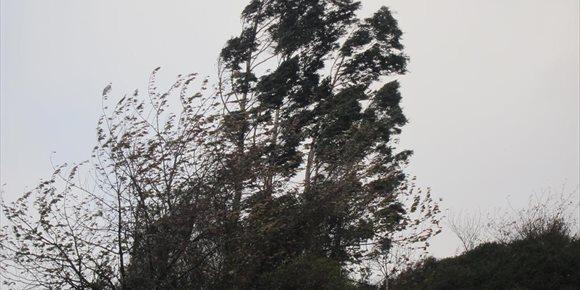 3. La Región registra 19 incidentes relacionados con el episodio de viento, ninguno de ellos grave