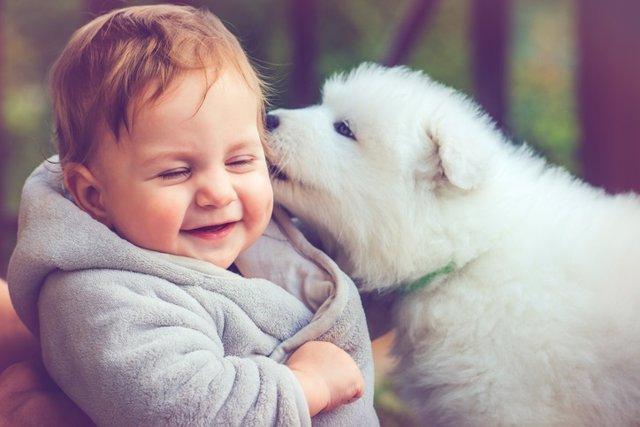 Bebé y perro, animales, mascota, mascotas, compañía, niño