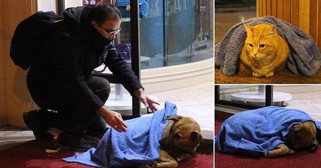 Un fotógrafo capta el gesto de un dentista cubriendo a un perro callejero con un