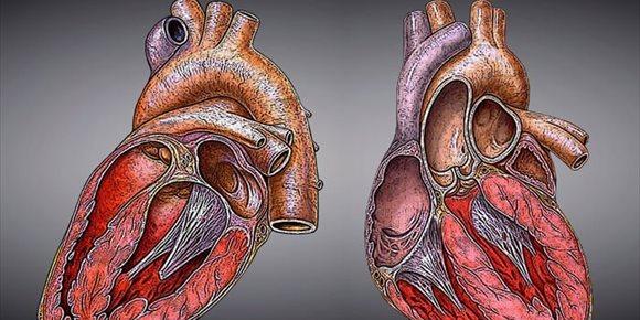 10. Descubren una proteína que podría curar el daño causado por una enfermedad cardiaca