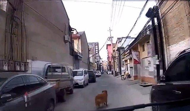 Un perro guía a la ambulancia hacia donde está su dueño y le salva la vida