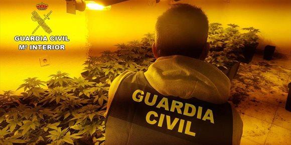 7. Detenidos dos jóvenes con más de 200 plantas de marihuana en Roquetas (Almería)