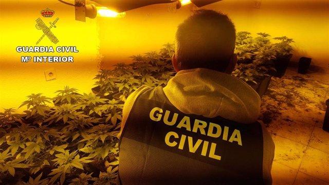 Plantación de marihuana localizada por la Guardia Civil