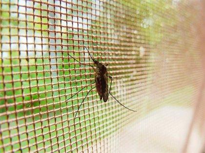 Crean un sensor que identifica mosquitos transmisores de enfermedades
