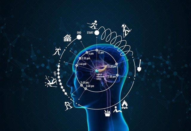Cerebro, tiempo