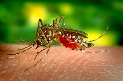 Un conjunto de genes predice la gravedad del dengue