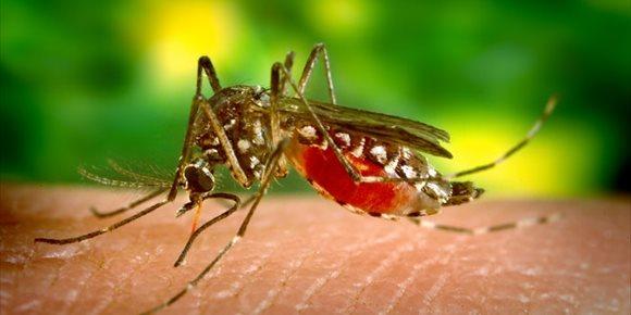 9. Un conjunto de genes predice la gravedad del dengue