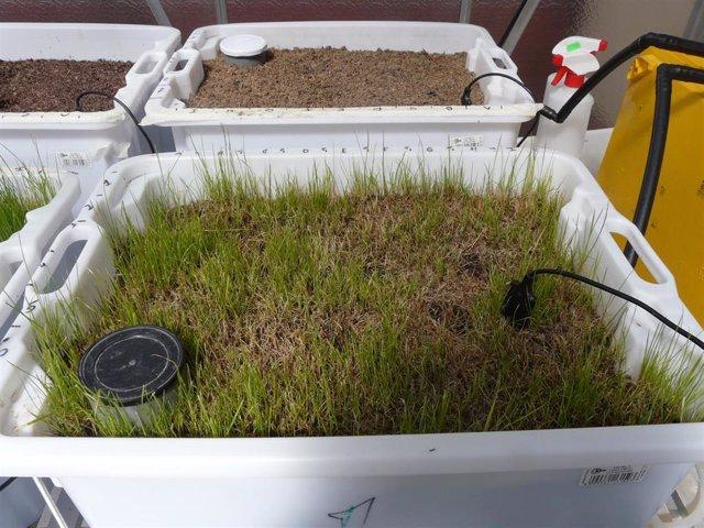Estudio con biobed sobre uso de residuos del olivar para eliminar fármacos de ag