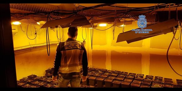 9. Desmantelado un laboratorio clandestino de marihuana en Lagartera con 151 plantas decomisadas