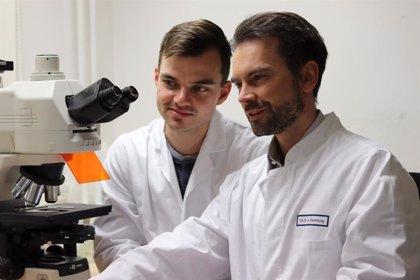 Hallan una proteína implicada en las enfermedades fibróticas