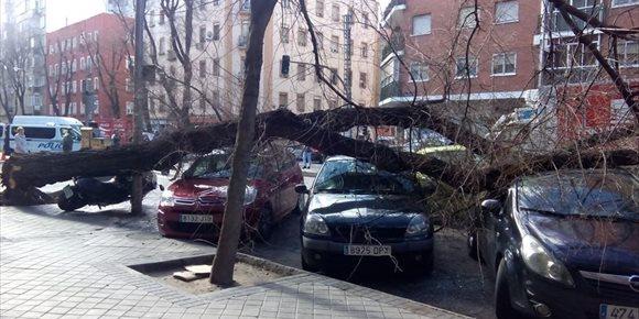 7. Cae un árbol de 20 metros sobre varios vehículos en la calle Embajadores