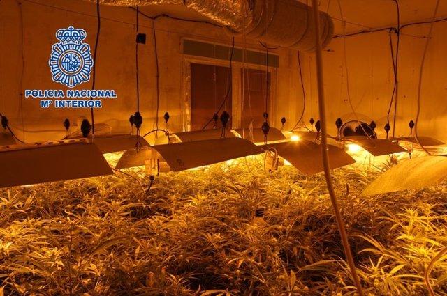 Plantación de marihuana intervenida en una vivienda de Granada