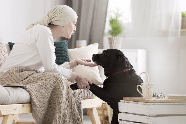 Cáncer, perro, terapia animales, máscota