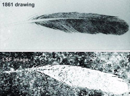 Comparativa del dibujo de la pluma en su descubrimiento y con la tecnología LSF
