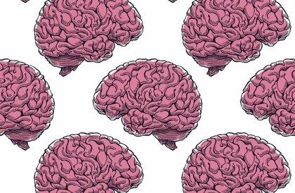 El cerebro no envejece igual en hombres y mujeres