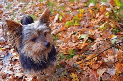 Peluche, el perro fiel que ayudó a que la policía localizara y rescatara a un anciano de 81 años atrapado en un barranco