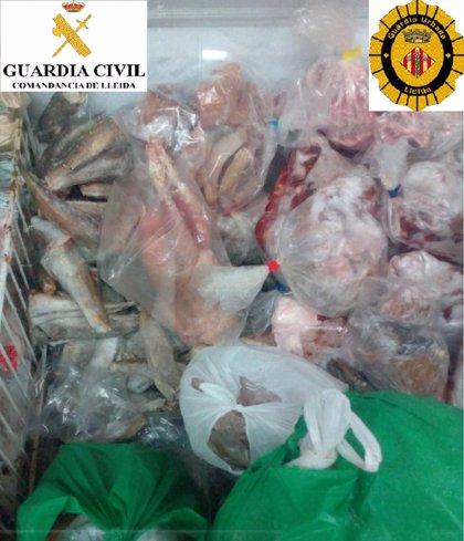 Localitzen nombrosos productes caducats i en mal estat en un establiment d'alimentació de Lleida
