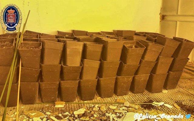 Utensilios incautados en una plantación de marihuana desmantelada en la zona nor
