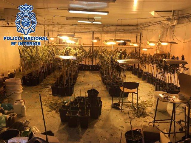 Plantación de marihuana en una nave industrial de Huércal de Almería