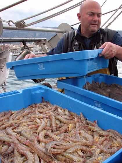 Els pescadors de Sant Carles de la Ràpita baten el rècord de captura de llagostins amb 54.000 quilos el 2018