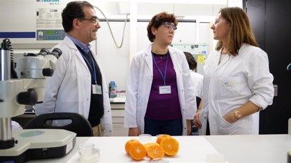 Un pigmento de la mandarina reduce un 30% la grasa corporal