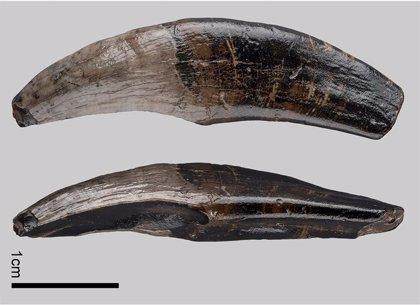 Fósiles de macaco descubiertos en el fondo del Mar del Norte