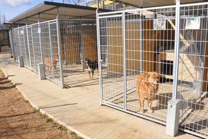 Amplien el refugi d'animals del Ripollès i es reserva espai per a gossos de races potencialment perilloses