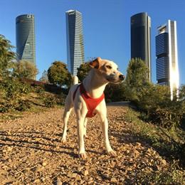 El primer perro turista que da la vuelta a España
