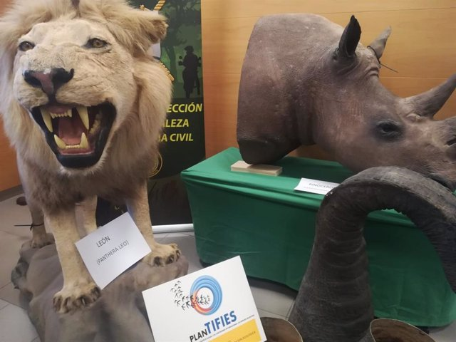 La Guardia Civil interviene más de 200 piezas disecadas de elefantes, leones y j