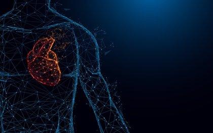 Descubren un interruptor molecular que evita que el corazón se agrande
