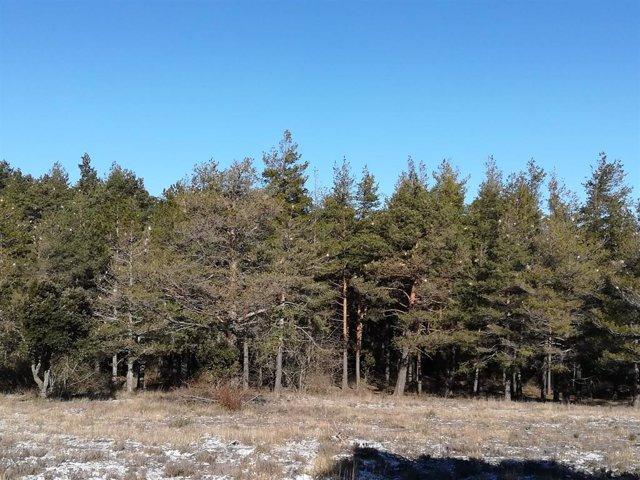 Boscos a les muntanyes de Prades