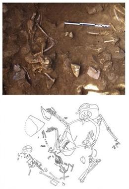 Restes de gos adult, situat entre esquelets humans