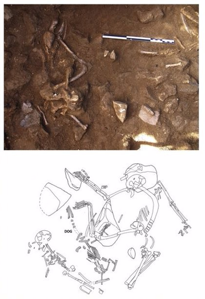 Enterrar gossos era un ritual habitual del neolític a la Península Ibèrica, segons un estudi