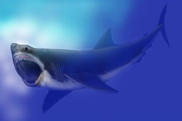 Representación artística de tiburón Megalodon de 16 metros de longitud en el Mus
