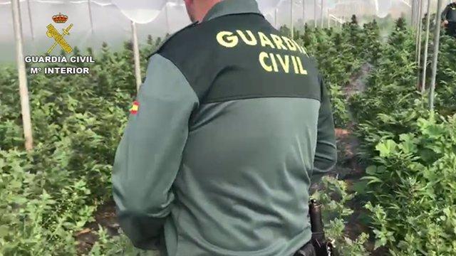 Un agente examina la plantación decomisada