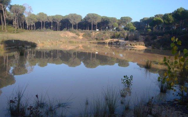 SEO/BirdLife realiza el seguimiento ambiental de cuatro humedales en Doñana