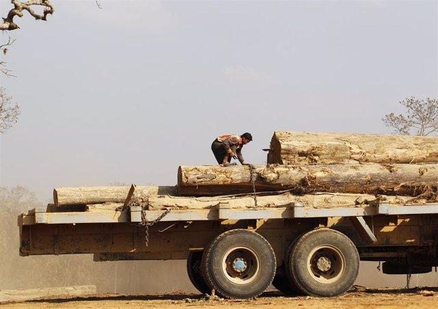 Cargamento de madera de Teca