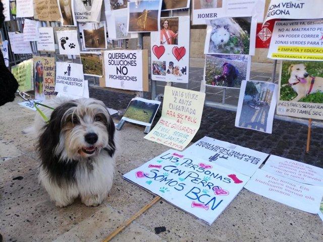 Uno de los perros de la manifestación de Espai Gos Barcelona