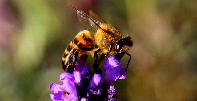 Una abeja durante la polinización