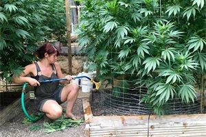 El cannabis en Chile, el tercer país donde más se consume del mundo