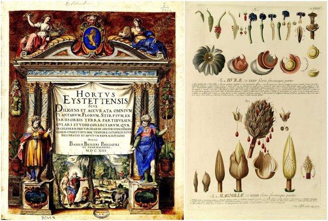 Página de un libro antiguo de botánica