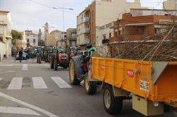 Els pagesos de l'avellana de Tarragona tornen a treure els tractors al carrer per reclamar a l'Estat ajudes al sector (ACN)