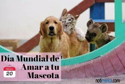 20 de febrero: Día Mundial de Amar a tu Mascota, ¿cómo vas a celebrarlo?