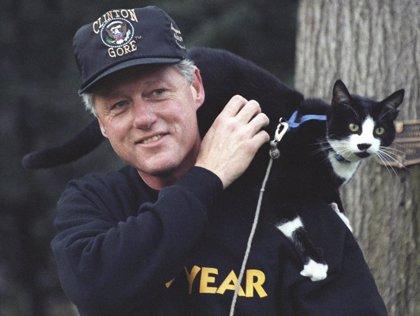 20 de febrero: Día Internacional del Gato, ¿por qué se celebra hoy?