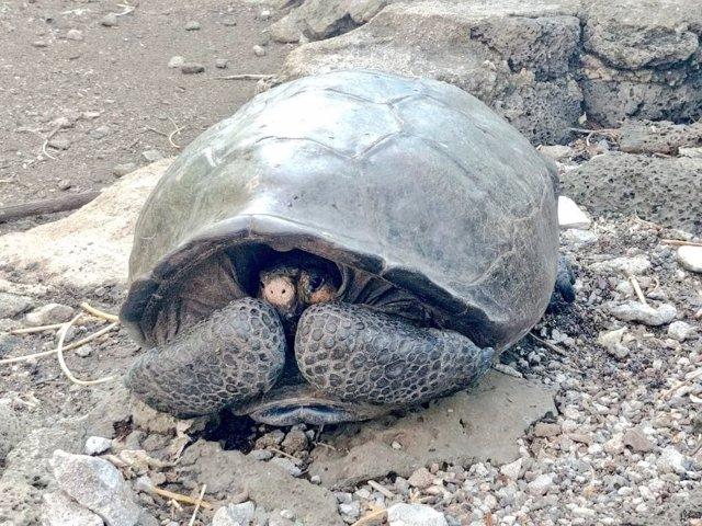 Hallan en Galápagos una tortuga gigante que se creía extinta desde hace 100 años