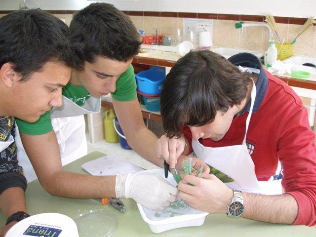 Estudiantes trabajan en un proyectos de investigación.