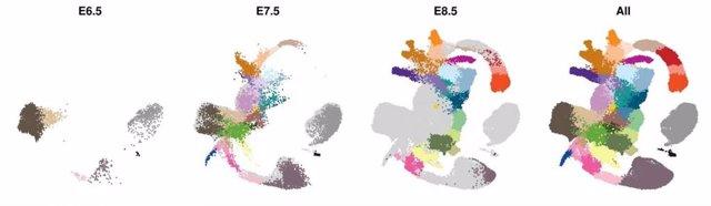 Reino Unido.- Investigadores establecen el plano molecular del desarrollo embrio