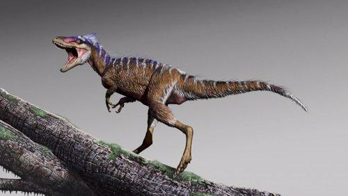 Nueva especie de diminuto tiranosaurio presagio del 'T. Rex'