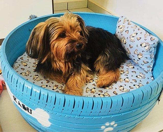 Artista brasileño convierte neumáticos usados en camas personalizadas para perro